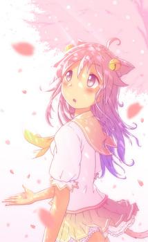049_cherry_blossoms.jpg